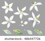 watercolor flower bergamot ... | Shutterstock . vector #486447736