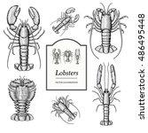 lobster vector illustrations ... | Shutterstock .eps vector #486495448