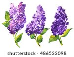 three beautiful watercolor... | Shutterstock . vector #486533098