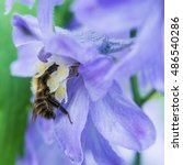 A Macro Shot Of A Bee...