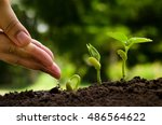hand watering to young plant... | Shutterstock . vector #486564622