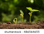 Small photo of Seedling and Plant sprout growing step over green background (Red Kidney Bean seed)