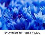Beautiful Spring Flowers Blue...