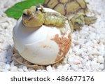 cute portrait of baby tortoise... | Shutterstock . vector #486677176