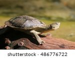 snapping turtle | Shutterstock . vector #486776722