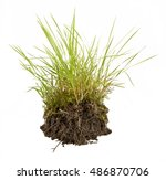 Green Grass With Earth Crosscu...