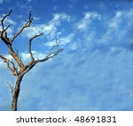 Clouds And Bare Tree