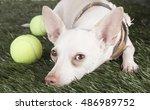 chihuahua studio | Shutterstock . vector #486989752