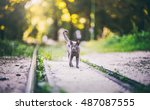 black panther cat in the sunny...   Shutterstock . vector #487087555