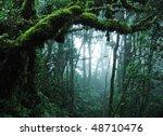 tropical rain forest | Shutterstock . vector #48710476