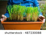 Woman Holding A Flowerpot With...