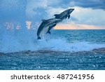 happy playful dolphins leaping...   Shutterstock . vector #487241956