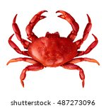 crab isolated on a white... | Shutterstock . vector #487273096