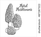 Set Of Morel Edible Mushrooms...