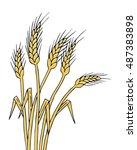 ripe wheat ears isolated ...   Shutterstock .eps vector #487383898