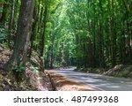 lines of tall green mahogany... | Shutterstock . vector #487499368