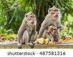 monkeys eat bananas.  monkey... | Shutterstock . vector #487581316