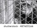 blurred chimpanzees wait for... | Shutterstock . vector #487605166
