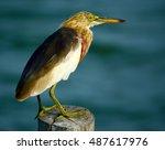 Beautiful Birds Bird In Sun...