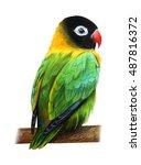Green Cute Love Bird Drawing