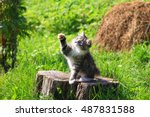 Stock photo cute playful kitten playing 487831588