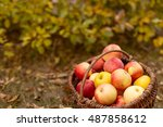 Organic Ripe Fruit In Basket I...