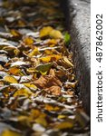 fallen leaves | Shutterstock . vector #487862002