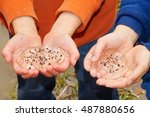 Small photo of Children hands holding amphibian egg mass in the spring, Ambystoma maculatum