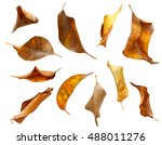 Set Of Dry Autumn Leaves...