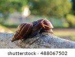 Two Snails Take A Walk On Earl...