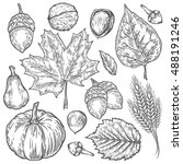 Vector Autumn Hand Drawn Set O...
