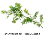 yew twig isolated on white... | Shutterstock . vector #488203855