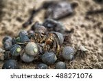 hermit crabs going on top of...   Shutterstock . vector #488271076