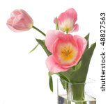 three pink tulips isolated on... | Shutterstock . vector #48827563