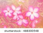 pink azalea flowers in soft... | Shutterstock . vector #488300548