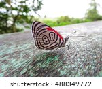 close up of a little butterfly... | Shutterstock . vector #488349772