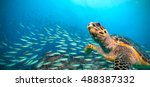 Hawksbill Sea Turtle Flowing I...