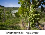 close up of grapes in a... | Shutterstock . vector #4883989