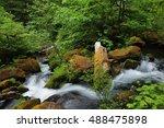 Silky water and lush vegetation near Watson falls, North Umpqua River, Oregon