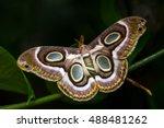 portrait of night tropical moth.... | Shutterstock . vector #488481262