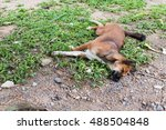 stray dog is sleeping on the... | Shutterstock . vector #488504848