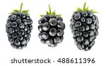 Isolated Blackberries. Three...