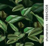 illustration of  calathea... | Shutterstock .eps vector #488642308
