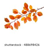 Branch Of Autumn Leaves  Cherr...