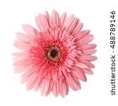 Pink Flower Head Surface Top...