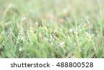 water drop on top of grass in... | Shutterstock . vector #488800528