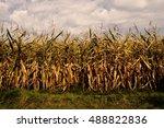 maize | Shutterstock . vector #488822836