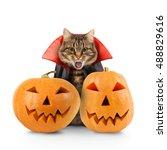 cat evil with fangs in black... | Shutterstock . vector #488829616