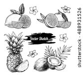 vector fruit set.  sketch... | Shutterstock .eps vector #488931526