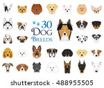 dog breeds vector collection ... | Shutterstock .eps vector #488955505